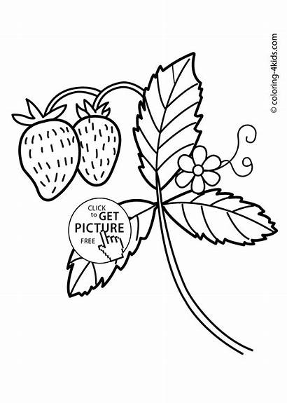 Nature Coloring Strawberry Printable Pages Strawberries 4kids