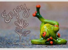 Kostenloses Foto Frosch, Entspannt, Figur, Lustig