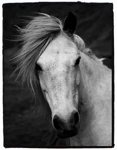 Pin Cool-horses on Pinterest