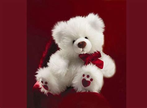 cute teddy bear pictures   fun