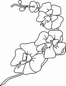 Clipart - Orchid