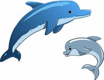 Dolphin Sea Animals Mother Child Vector Ocean