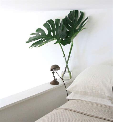 plantes pour chambre plante d 233 polluante offrez un bol d air 224 votre int 233 rieur