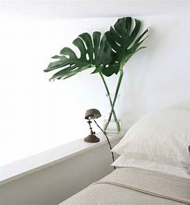 Plantes Pour Chambre : plante d polluante offrez un bol d 39 air votre int rieur ~ Melissatoandfro.com Idées de Décoration
