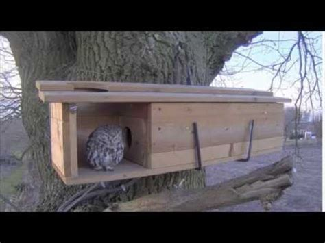 owls nest box visit pm    youtube