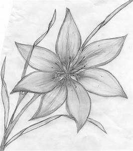 """Lily,Pencil Drawing, "" by MaeBelle 