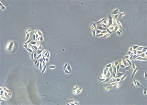 proper cell culture quick check leica science lab