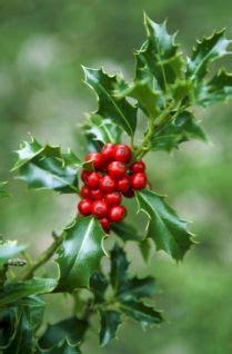 irish christmas traditions    ancestors