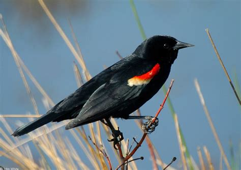 17 best images about backyard birds of east central