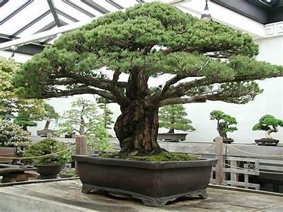 Bonsai Tree Digital Olympus Camera