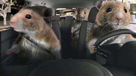 rodent control melbourne western suburbs pest control