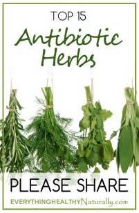 Top Antibiotic Herbs