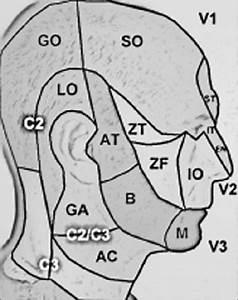 Sensory Dermatomes Of The Head And Neck  The Major Sensory