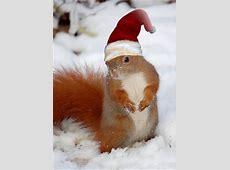 Tiere im Wald Das Eichhörnchen 2 primolode