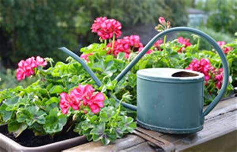 Balkonpflanzen Für Sonnige Und Schattige Standorte