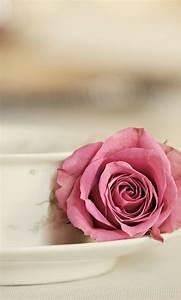 Elegant rose. 26 Happy Valentine's Day Flowers Wallpapers ...