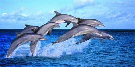 panama scoperto  fossile  una nuova specie  delfino
