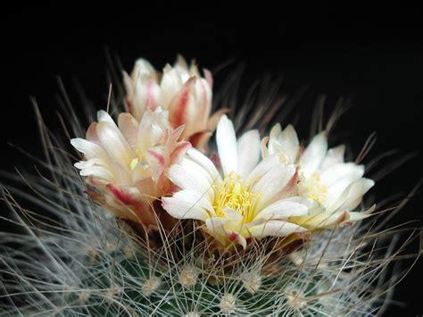 images flower petal botany flora plants