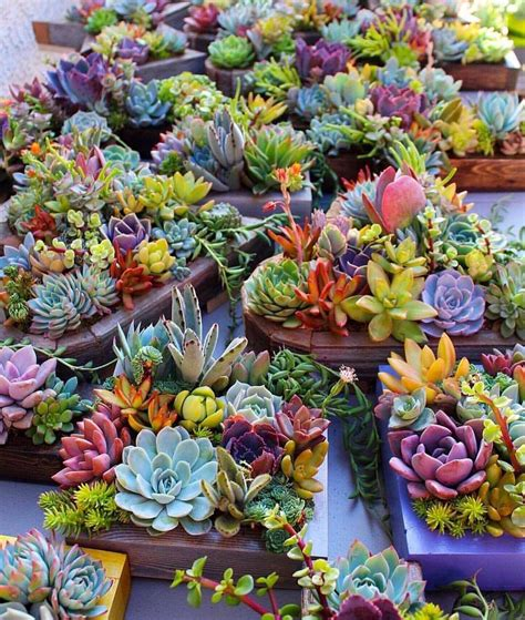 Garden Beautiful Succulents by Beautiful Succulent Planters Beautiful Containers