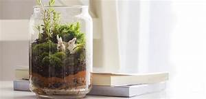 How to Create a Bottle Garden in 5 Easy Steps Budget