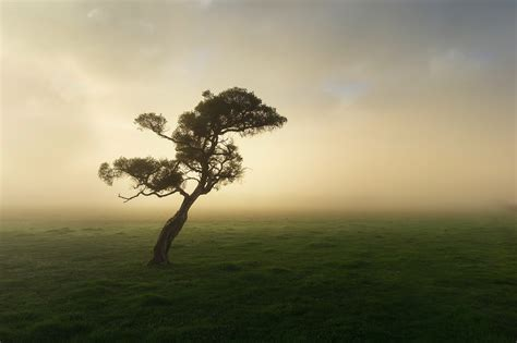 Misty Mornings In The South West Rob Dose Landscape And