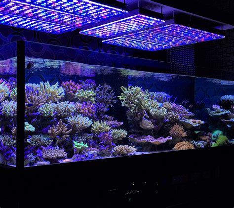 saltwater tank lights aquarium led lighting photos best reef aquarium led