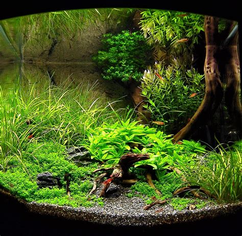 Aquascaping Tank by Marcel Dykierek And Aquascaping Aqua Rebell