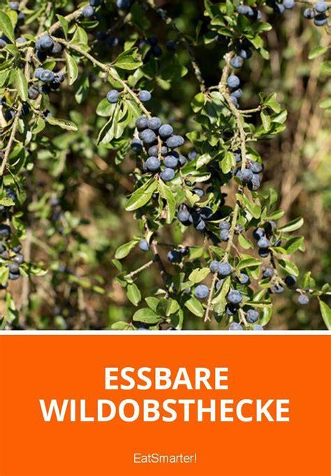 Garten Pflanzen Essbar by Essbare Wildobsthecke Gr 252 Ne Beete Der Gartenblog Auf