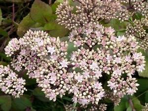 Arbuste Plein Soleil Longue Floraison : fleurs de terrasse plein soleil excellent vivaces ~ Premium-room.com Idées de Décoration