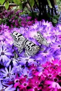 Purple Flowers and Butterflies Love