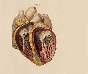 Anatomy Hearts Wallpapers Hd    Desktop And Mobile Backgrounds