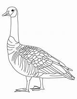 Goose Coloring Pages Goosebumps Canada Drawing Slappy Barren Geese Printable Clipart Library Canadian Getcolorings Getdrawings Clip Popular Results Coloringhome Ostrich sketch template