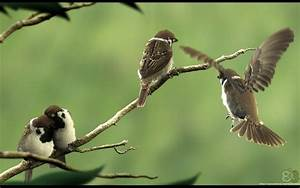 Birds Wallpapers Download Free Love Animation Cute - Litle ...