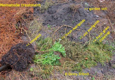 Nematode In Home Garden green gardening matters nematodes marigolds and crop