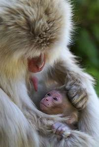 16 Moments About Animal Parenting – Creative Picture