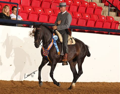 andalusian pre cross thoroughbred mares toulouse nothing doma horse vaquera aryn farm glen champion mare national sport multi