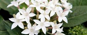 White Pentas StarCluster - Pics about space