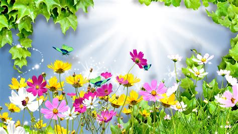 Flower Animation Wallpaper - summer of animation wallpapers other animated summer