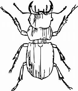stag beetle black white line art coloring book ...