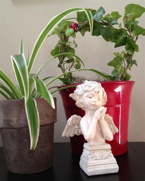 houseplant care  keys  success hgtv