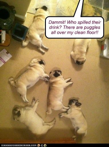cleaning puggles    carpet    pain    hotdog dog pictures funny