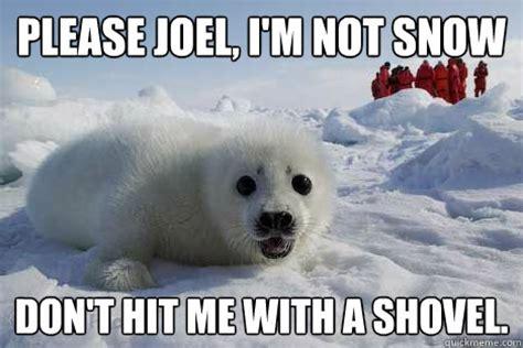 Shoveling Snow Meme - please joel i m not snow don t hit me with a shovel clubbing seal quickmeme