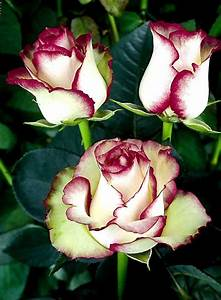 Beauty of Osiria Rose - XciteFun.net