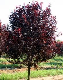 Fruit Tree Wholesale Nursery