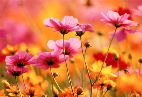 plant types annual perennial growing different types of flowers annuals perennials flowers growing from bulbs global