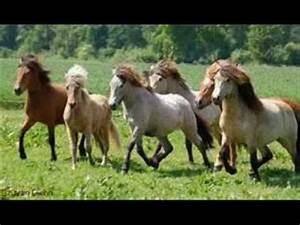 Die Schönsten Gartenbäume : die sch nsten tiere der welt pferde youtube ~ Michelbontemps.com Haus und Dekorationen
