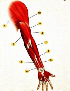 Anatomy Muscles Test