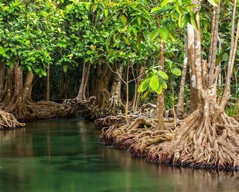 Florida Mangroves Razed For Boat Show « Inhabitat Green