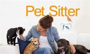 pet sitter baba de animais curso online com certificado With babysitter dog sitter
