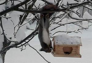 Können Mäuse Klettern : wei e weihnacht ist f r viele wildtiere eine schwere zeit ~ Markanthonyermac.com Haus und Dekorationen